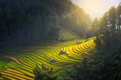 Terrazas de arroz de Filipinas y El Nido