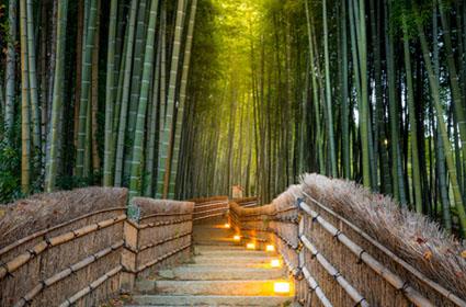Viaje Japón al completo: Camino de Kumano